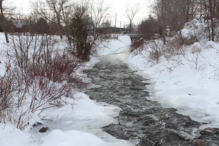 Fast-flowing creek