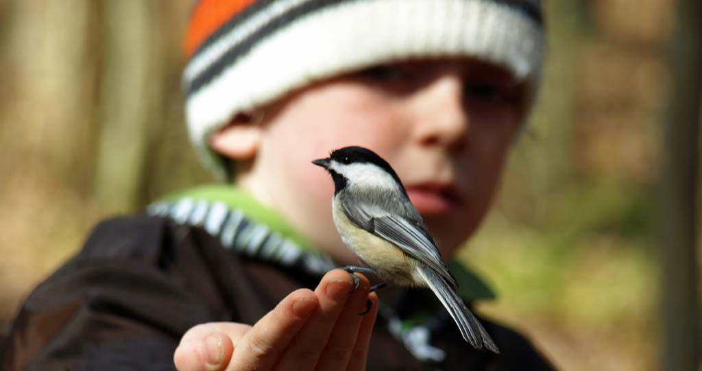Child with chickadee