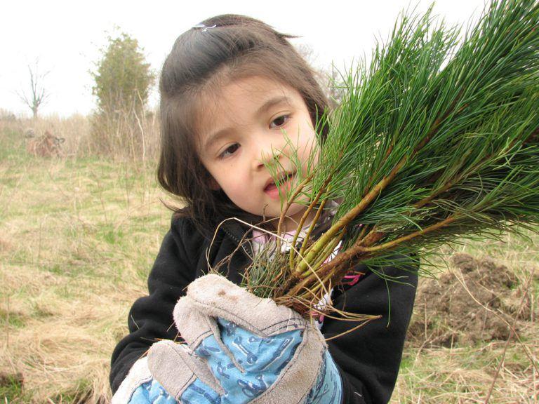 Girl Holding Seedling